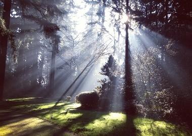 las swiatlo MALO