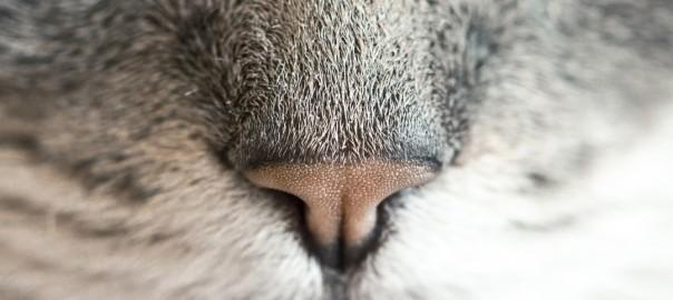 nose-cat
